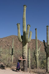 IMG_0830 (quinn.anya) Tags: arizona saguaronationalpark