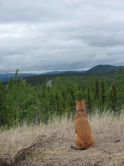 IMG_3222.JPG (JaredWO) Tags: alaska fire research boreal