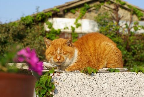 Flower & cat