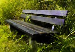 Forest visions (haikus*) Tags: grass forest bench lost dreams anawesomeshot diamondclassphotographer flickrdiamond naturephotoshp theunforgettablepictures proudshopper theperfectphotographer goldstaraward