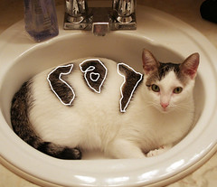 c-a-T (mandrake68) Tags: brown white cute cat bathroom sink kitty honey dsh