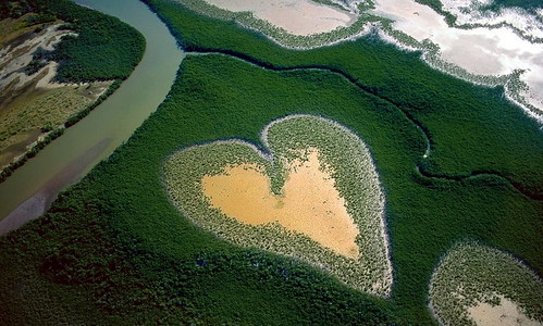Amazon Heart
