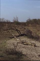 roosendaal-84332-0541 (Cor Draijer) Tags: zandvoort roosendaal mijndert