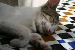 cat nap (fatimaflicks) Tags: travel colors morocco maroc fatima
