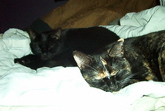 Cats (stephanievand) Tags: cats jinx hex
