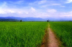 Green/Blue (Nora Carol) Tags: sky mountain tree field clouds landscape paddy sony hut malaysia a200 sabah kota sawah belud malaysianphotographer kotabelud noracarol sabahanphotographer landscapephotographerfromsabah womanlandscapephotographer womaninphotography