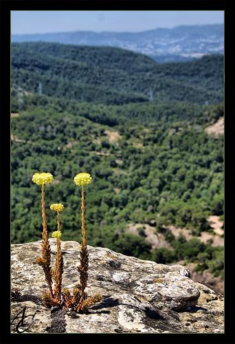 Flors amb vistes