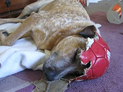 Charlie - Soccer Dreaming