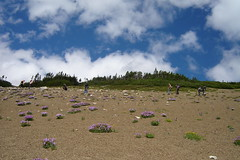 scree scape (Michelle Elaine.) Tags: flowers summer sky canada mountains clouds landscape purple hike alberta scree nordegg rockymountains mountainside slope whitegoatwilderness