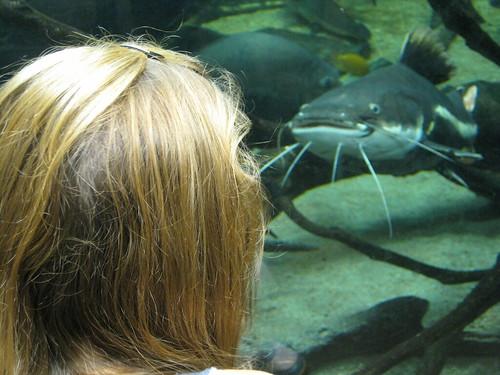 Micaela says hi to a catfish at Montreal's Biodome