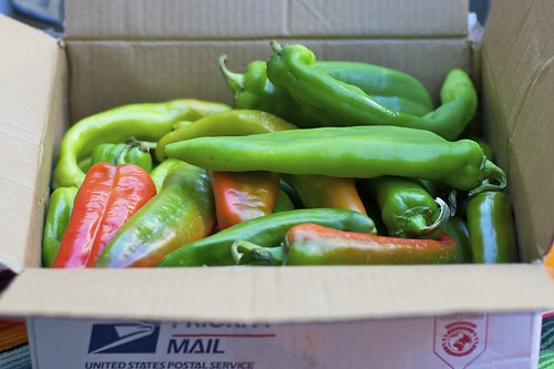 Andy Stone's New Mexican Green Chiles