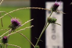 (lucas/claus) Tags: autumn flower f100  n1600 70200mmf28