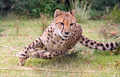 Turning Point.......! (Connie Lemperle) Tags: searchthebest explore karma tgif animalplanet cincinnatizoo animaladdiction specanimal animalkingdomelite lemperleconnie allrightsreserved elpasojoesplace ohiozoos zoosaroundtheworld