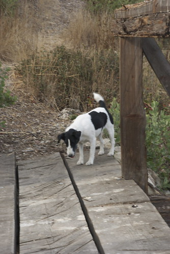 Then she stands and emits piercing yelps for an hour at another furry critter who ran under this bridge.