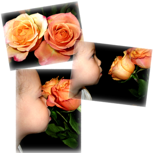 Ellie and the Roses