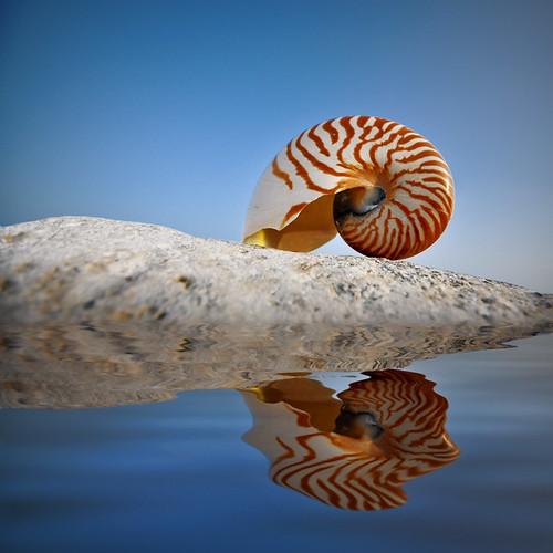 Shell - my 300th Explore image, big thanks