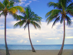 palm trees (tisogal) Tags: beach florida skimboarding enhanced