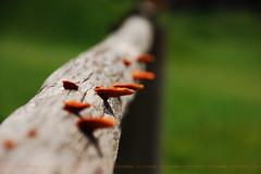(lincoln koga) Tags: life nature colors cores nikon dof cerca 2008 tronco desfoque koga crescimento d40 18135mm lincolnkoga amadurecimento anocheiodeinspiração