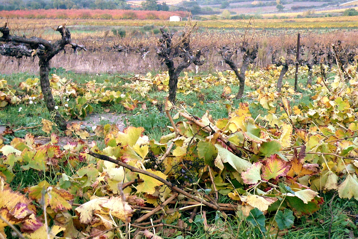 cutting the vines