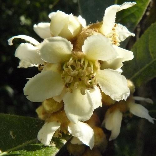 Fleurs,....fruit,.....tout ce qui se mange,...se boit....ou qui vient de la nature.......... - Page 5 3030608506_367bb5b84a