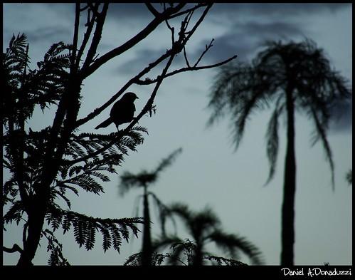 Pássaro em Contraluz