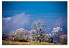 _MG3618 (Buffalo Ridge Shutterbug) Tags: trees winter cold colors landscape scenery tn temperature rime