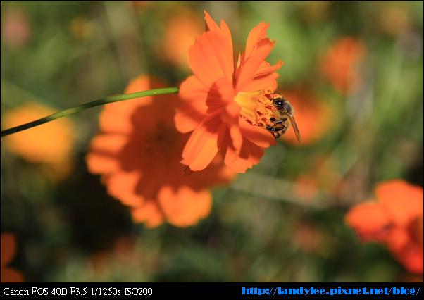 9711-新社花海:Date with Bee_087.jpg