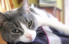 ellie! (Maʝicdölphin) Tags: cat canon powershot ellie a590