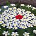 Flower arrangement, Balinese art
