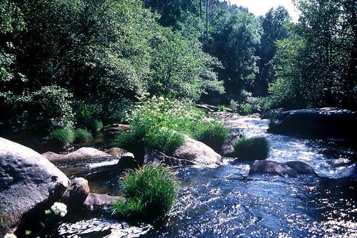 Curso medio río Umia