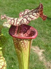 Enregistrement de cultivars NAPP 3090779510_f462a5a6d2_m