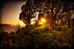 out in the woods (Kris Kros) Tags: california bear ca sunset usa lake flower tree photoshop landscape photography big high bush nightscape dynamic socal kris 2008 range hdr kkg cs3 photomatix kros kriskros 5xp vosplusbellesphotos flickrclassique kkgallery