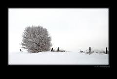 Fence Line (ICT_photo) Tags: winter snow ontario tree fence guelph front highkey barrie ictphoto ianthomasphotography ianthomasphtogaphy ianthomasguelphontario