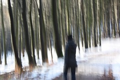 out of focus (cc) (marfis75) Tags: wood trees forest germany way deutschland woods focus wiesbaden fuzzy selva surreal blurred exhibition outoffocus cc bosque stadt skog koi wald floresta foret unscharf mata baum bois ausstellung weg stopmotion bosco diffuse foresta jaggy woud verwackelt creativecommon boschi ccbysa marfis75 stopandmotion marfis75onflickr koinudelbar
