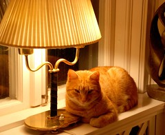 Content cat (Miss Claeson) Tags: christmas light house lamp cat nikon december sweden warmth dalar nikond80