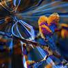 Printemps de bleu et d'or (JMVerco) Tags: photomanipulation square digitalart creative création creazione proudshopper jmlinder