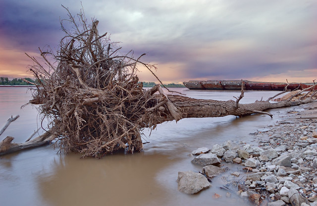 Tree trunk and barges in the Mississippi River, in Lemay, Missouri, USA