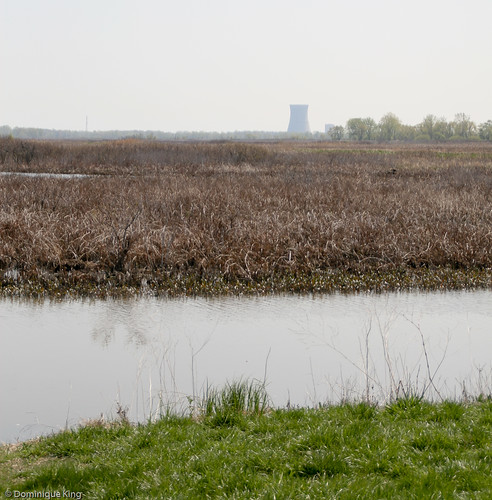 Magee Marsh, Ohio wildlife refuge-6