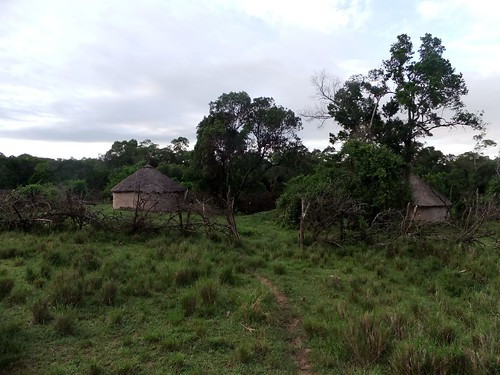 Standard four student Ryle's home in Pusanki, near the Maasai Mara. Their home is essentially a semi-clearing in the middle of the bush, in the middle of an even more expansive savannah.