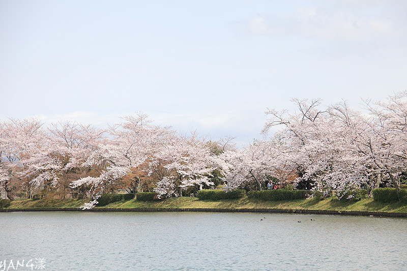 京都嵐山清涼寺、大覚寺