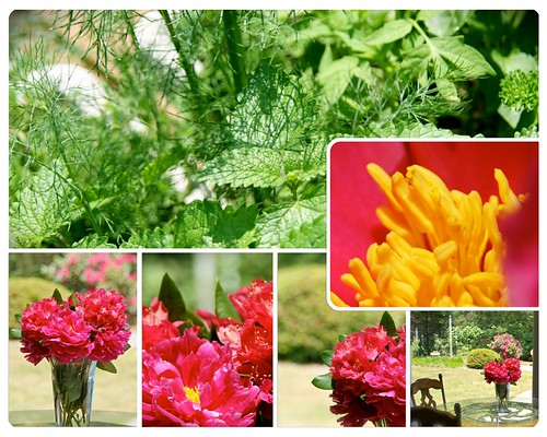 garden collage by jackietphotos