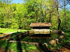 Agua (Jesus_l) Tags: espaa agua europa aia guipzcoa jesusl parquenacionaldepagoeta ferreradeagorregi