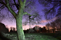 Jupiter Shining Through the Branches (Beardy Vulcan) Tags: park trees winter england tree field night stars twilight branch nocturnal dusk branches january hampshire planet jupiter shining gemini basingstoke 2014 loddonvalley brightonhill hatchwarrenpark