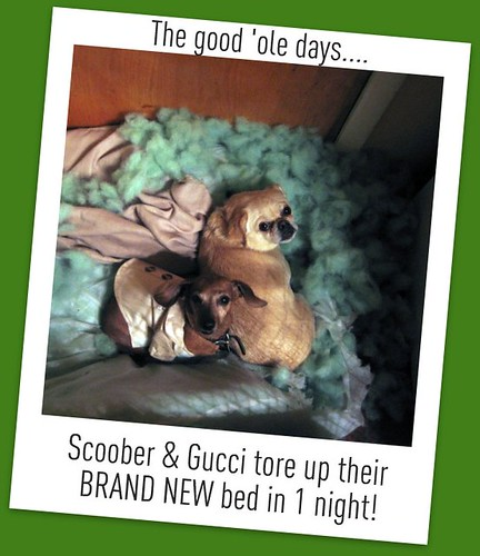 Dogs who tore up their entire bed!