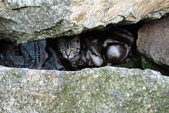 Cats on the Rocks - 2 (basswulf) Tags: sea cats lenstagged spain rocks harbour gimp galicia acoruna 1855mmf3556g digitaldarkroom d40 permissions:licence=c 200803 20080305 1320x880