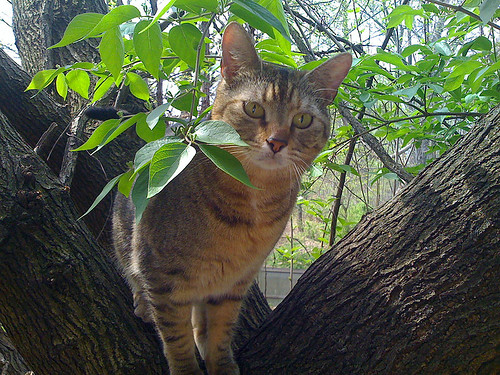 Cat climbing a tree - Taken With An iPhone