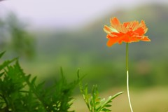 Everyday should be Earth Day.. (Sir Mervs) Tags: flowers canon eos pk sir pinoy deichmann earthday manalo mervin april22 canonef28135mmf3556isusm mervs 40d saveearth diamondclassphotographer ko