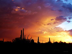 The Storm's Edge (ScenicSW) Tags: sunset arizona storm southwest clouds colorful desert tucson stormy explore monsoon 1001nights picturesque sonorandesert amazingcolors smrgsbord desertsouthwest blueribbonwinner supershot desertscape weatherphotography monsoonstorm platinumphoto anawesomeshot aplusphoto skycloudssun superbmasterpiece desertbeauty brillianteyejewel colourartaward artlegacy monsoonsummer theperfectphotographer goldstaraward thesuperbmasterpiece ilovemypics silhouettephotography absolutelystunningscapes allkindsofbeauty explorewinnersoftheworld qualitypixels thechallengefactory skyascanvas overtheshot natureandnothingelse therebeastormabrewin colorsinourworld scenicsw arizonathunderstorms agcgwinner mygearandmepremium mygearandmebronze mygearandmesilver mygearandmegold
