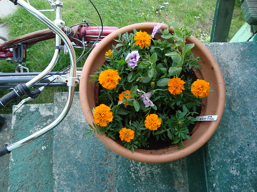 my marigold planter