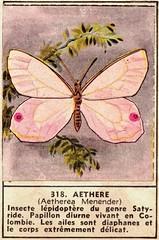 papillon 318